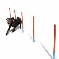 Rosewood pet Slalomas