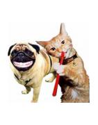 Dantų Gelis Katėms, Priemonės Gyvūnų Dantų Priežiūrai - Ciucikas.lt