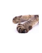Žirklės Katės Nagams - Ciucikas.lt