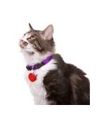 Antkakliai, Petnešos Katėms - Ciucikas.lt